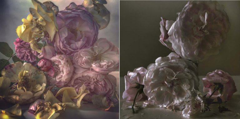 Roses Nick Knight PamsLab