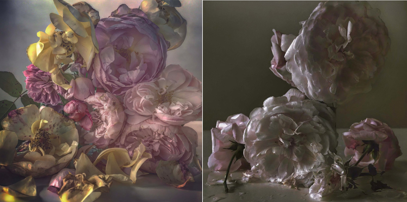 Roses from My Garden – Nick Knight